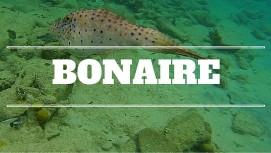 Bonaire Link
