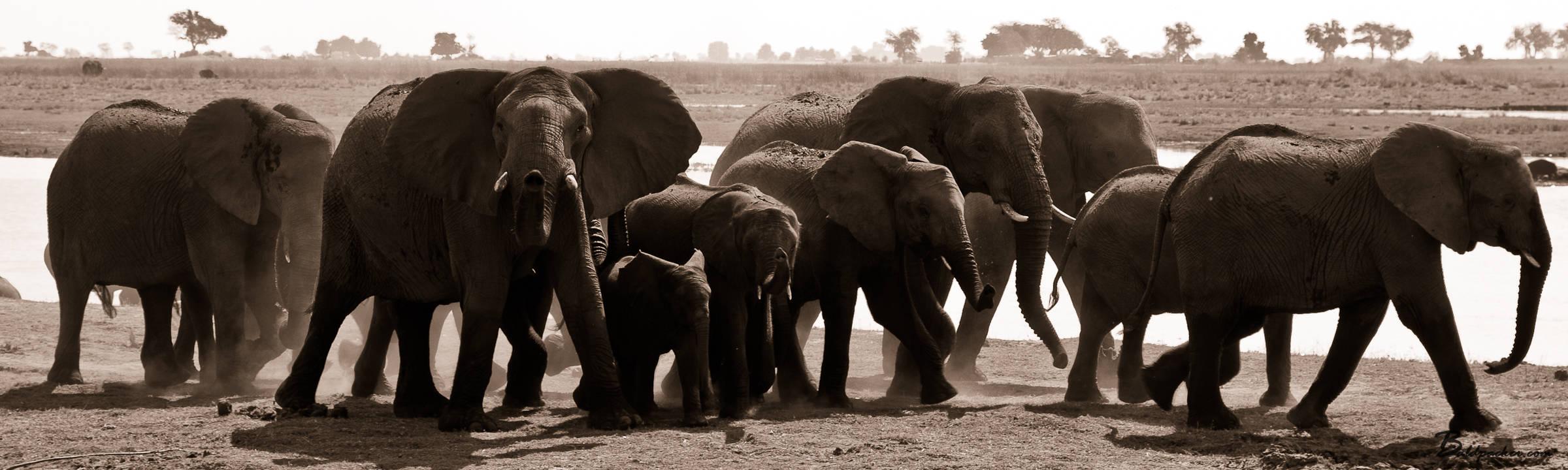 Beautiful Botswana: Chobe National Park Safari