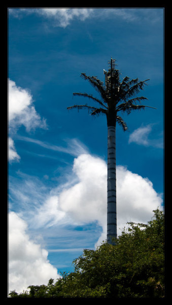 Cell Phone Tower Disguised as a Palm Tree