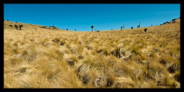 High Altitude Grasslands
