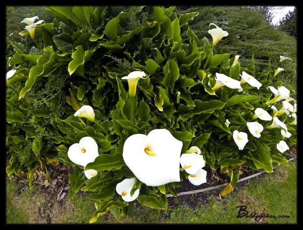 Beautiful Gardens Adjacent to Cascade Brewery, Hobart, Tasmania
