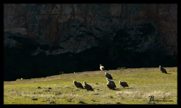 Vultures Near San Frutos Monastery