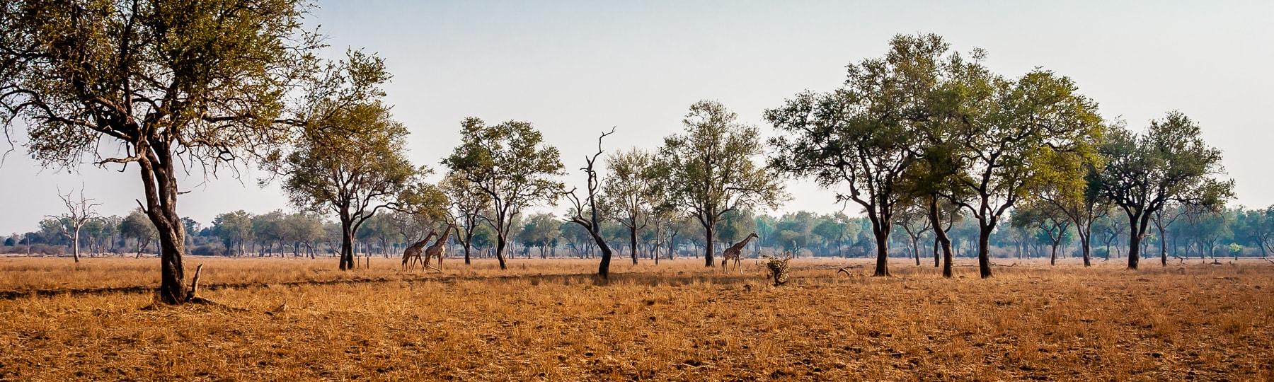 Luangwa Park Zambia min