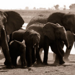 Beautiful Botswana: Chobe National Park Safari
