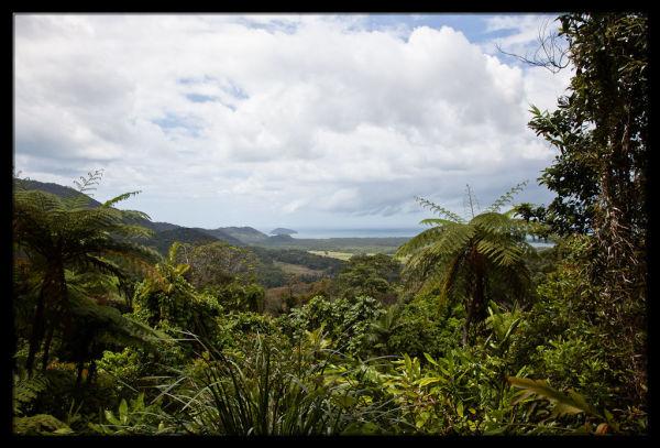 Alexandra Range Lookout - Daintree Rainforest