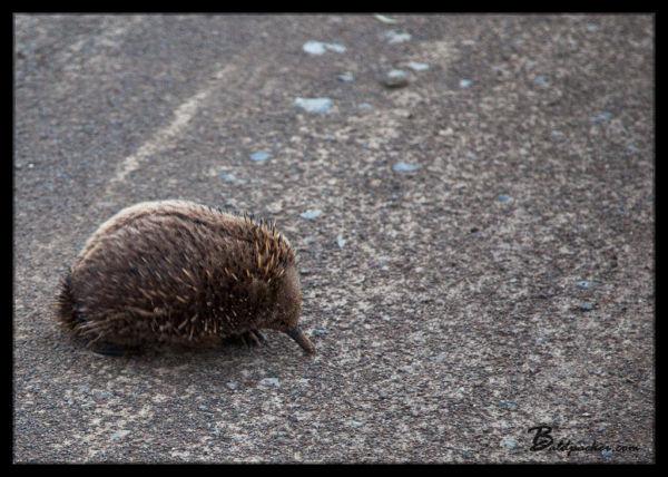 Dog Bark Road Tasmania
