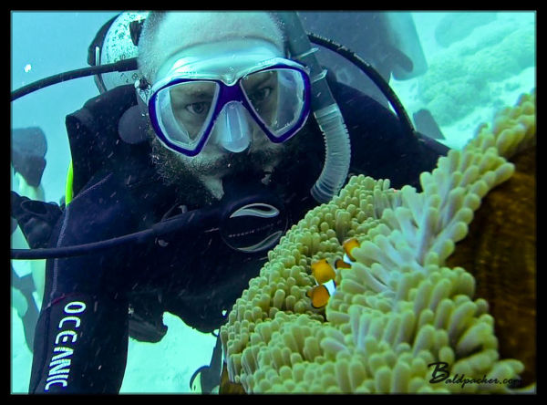 Clown Fish - Great Barrier Reef