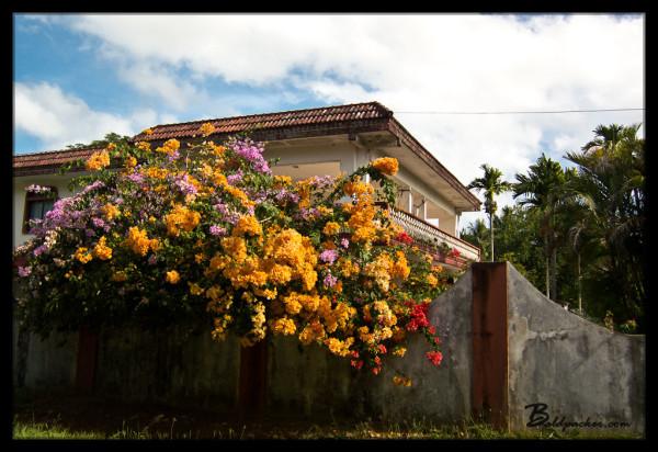 House and Flowers on Saipan