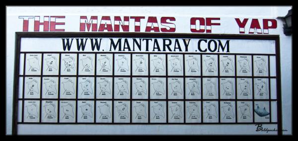 Manta Ray Bay Resort's Manta Ray Identification Chart