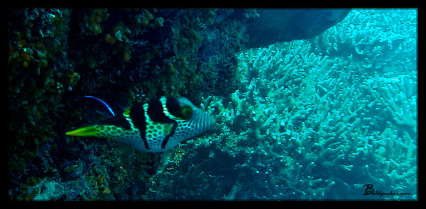Fish on Scuba Dive in Yap