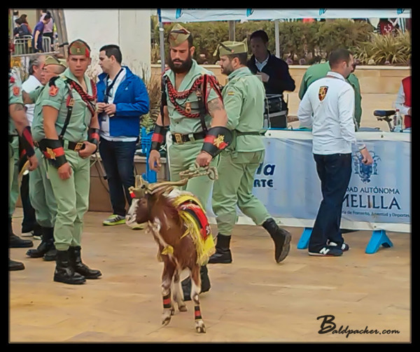 Spanish Legion Goat